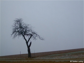 stuehlingen_einsamerbaum.jpg